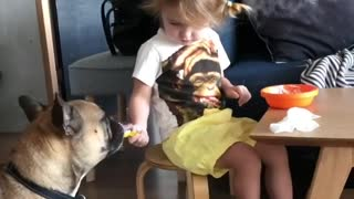Charming Little Girl Shares Yummy Breakfast With Her Doggy   - Video