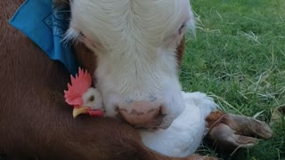 Unlikely Friends Embrace at Animal Sanctuary