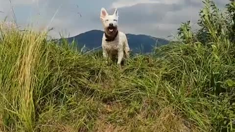 Dog Likes To go Out