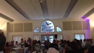 Owl Ring Bearer Literally Crashes Into Window At Wedding