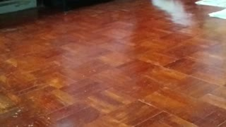 Cockatoo Loves His New Toy - Video