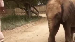 Small cute Elephant play with sand - Video