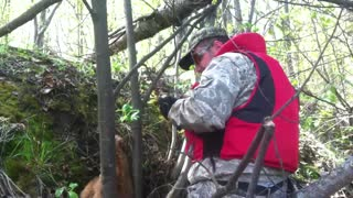 Calf Rescued from Steep River Bank - Video