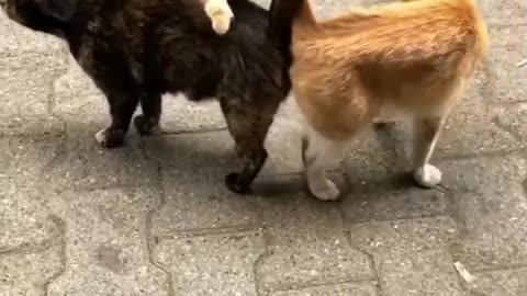 2 cats getting to know each other