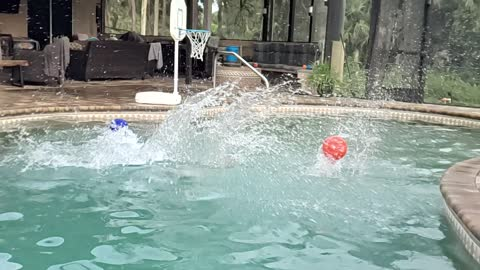 Dog Diving Into Pool Slow-Mo