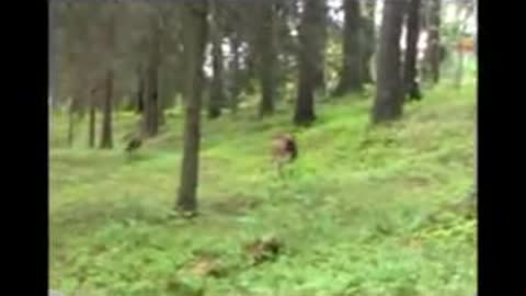 Dog get scared by Deer