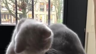 2 cats washing each other for new look comfort - Video