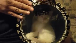 Cute Kitten Sneaks Into Drum!