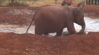 Baby elephant plays soccer in a water hole - Video