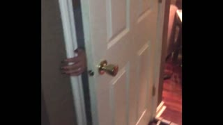Dog Knocks Gate Over And Traps His Owner In The Closet - Video
