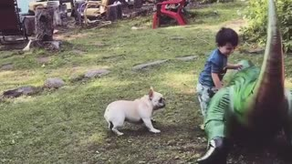 Little boy blowup trex white frenchie fall over
