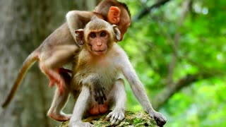 Best friend of baby monkey Janna come to play with her
