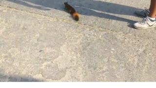 Saving the squirrel from death