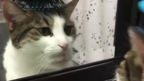A cat likes to look in the mirror