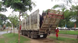 TRANSPORT OF ELEPHANTS.MOV