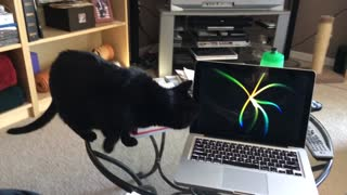 Cat Scared of Computer Screensaver! - Video