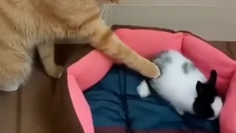 How my cat touched the crazy 1 eye rabbit on sudden move