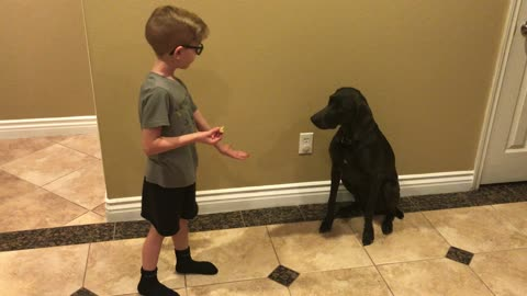 Boy trains dog new tricks!