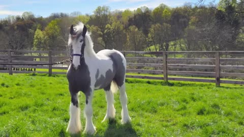 10 Beautiful Horse Breeds You Might Not Know Exist