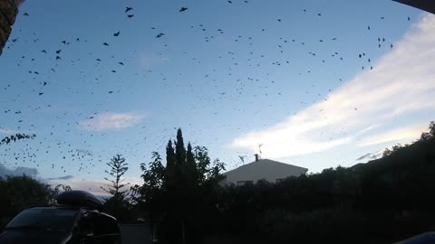 "Mesmerising Bird Tornado ""Millions of birds suddenly fill the sky!"