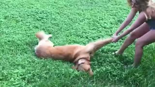 Dog getting pulled by its legs across the lawn - Video