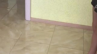 Cat Climbs Wall - Video