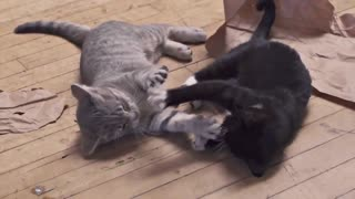 2 Kittens dancing in Slow Motion - Video