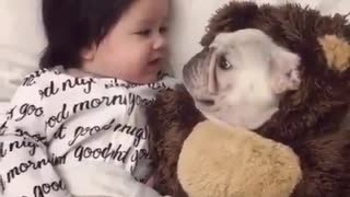 little dog sleeping next to baby - Video