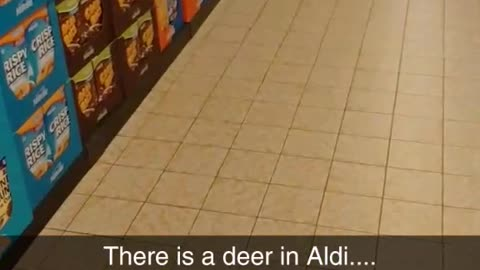 Deer Decides To Go Shopping At The Local Supermarket