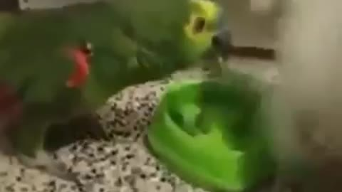 A cat punches a parrot while eating its food