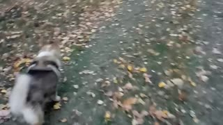 Walk with my dog in the Russian forest