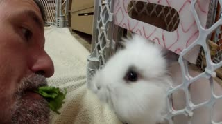 Cute bunny eats from owner's mouth - Video