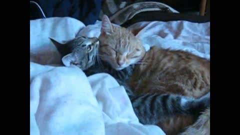 A real friendship of two cats.