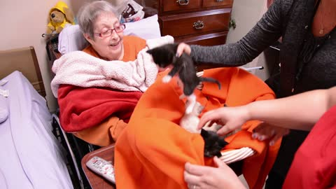 Woman in Hospice gets her dying wish: Basket of precious kittens!