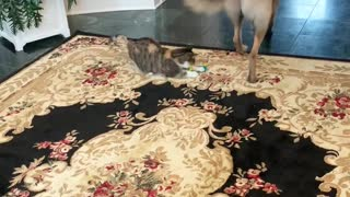 German Shepherd Uses Cat Toy to Play with Cat