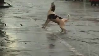 A very cute dog is playing in the rain and enjoy with water