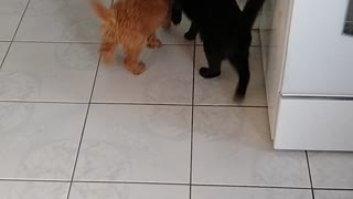 Dolly Doodle meets ollie the cat