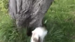 Cat runs toward tree and fails  - Video