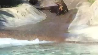 Seals riding water slide - Video