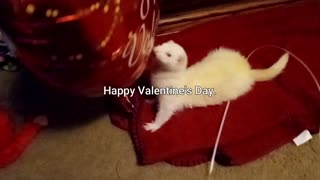 Happy Valentine's Day from a much older. Snowball.