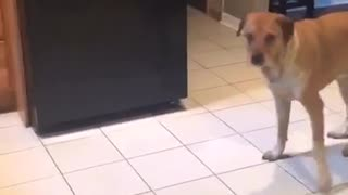 Music brown dog catching treats in different rooms