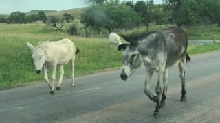 You never know who you will meet on the road