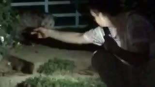 Possum bites guy trying to pet it - Video