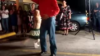 Dog Salsa Dancing - Video