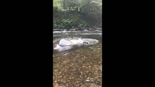 Dog Dramatically Slips Off Rock in River