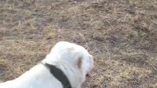 dog on training ..... - Video