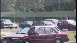 Monkeys messing with cars
