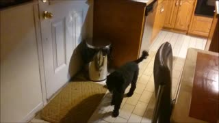 Dog Punches Garbage Can To Get Owner's Attention