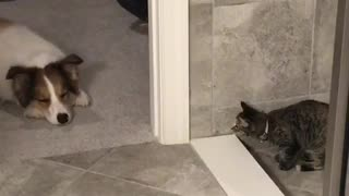 Cat fails at scaring sleeping dog - Video