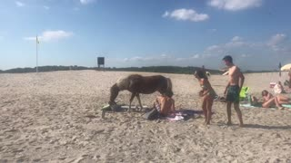 Horses Casually Stroll through Crowds of People on Beach